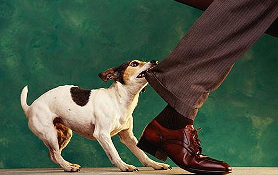 Δάγκωμα από σκύλο